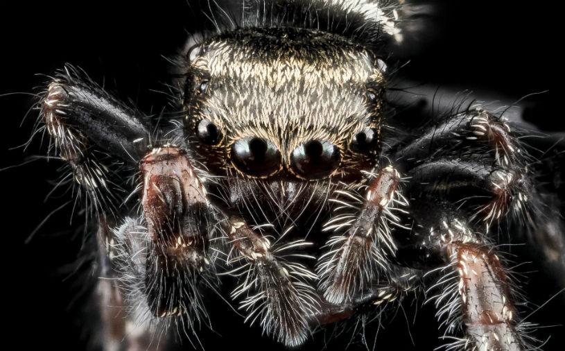 sf-spider_0