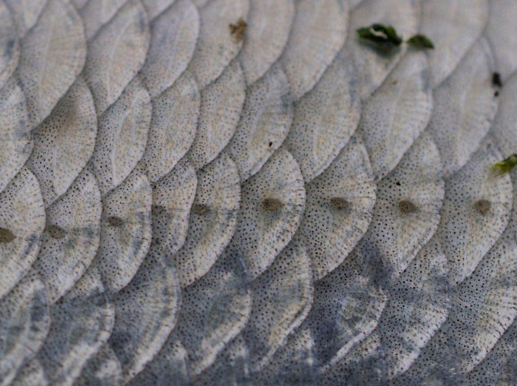 les-restes-de-poissons-peuvent-etre-transformes-en-nano-generateurs-d-energie_width1024
