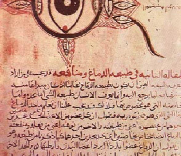 أقدم مخطوطة لتشريح العين