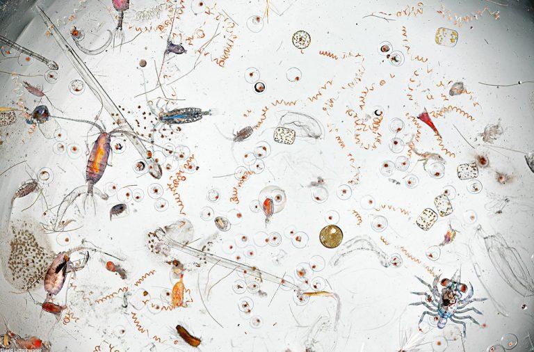صورة مُكبّرة 25 مرة لقطرة واحدة من مياه البحر