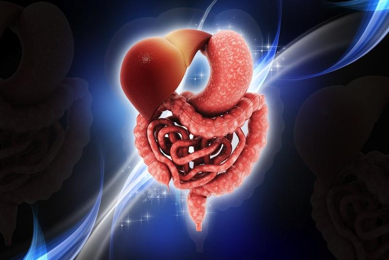 digestive-system-131004