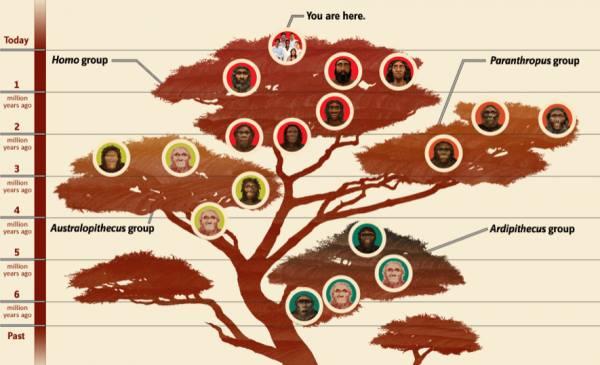 شجرة عائلة الانسان مقدمة المغرب العلمي