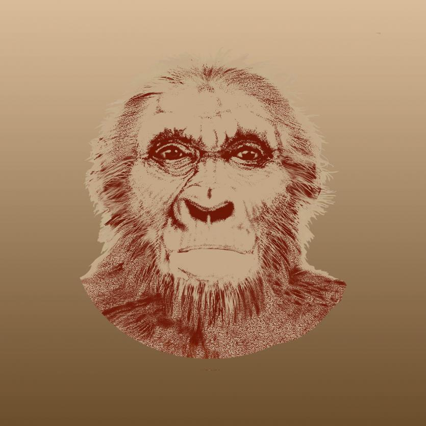 common_ancestor_illustration_kc_head_sq